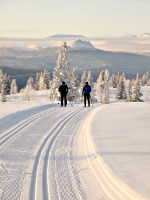 Cross-Country Track skiing near Lillehammer, Norway